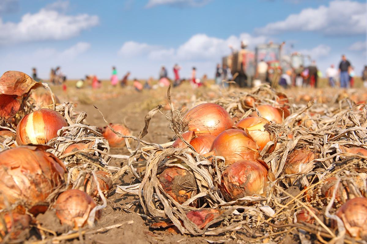 Endrede minstelønnssatser innen jordbruk og gartneri