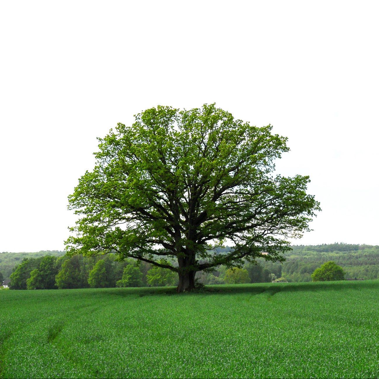 Skal stimulere til økt omsetning av landbrukseiendommer