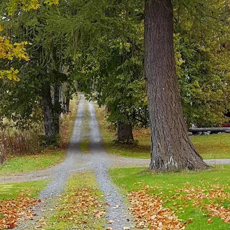 Økt tilskudd til skogsveier og tømmerkaier