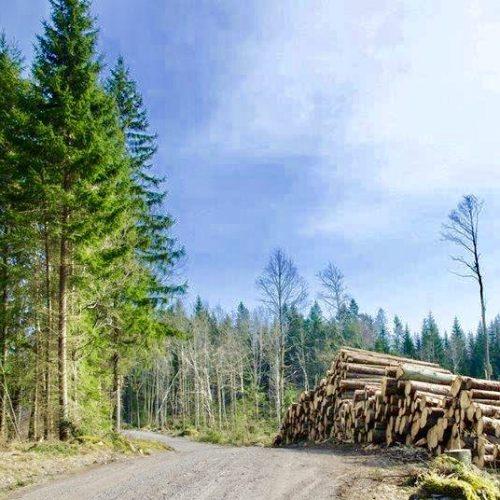 Skogbeskatning